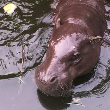 Wechiau-Hippo 2